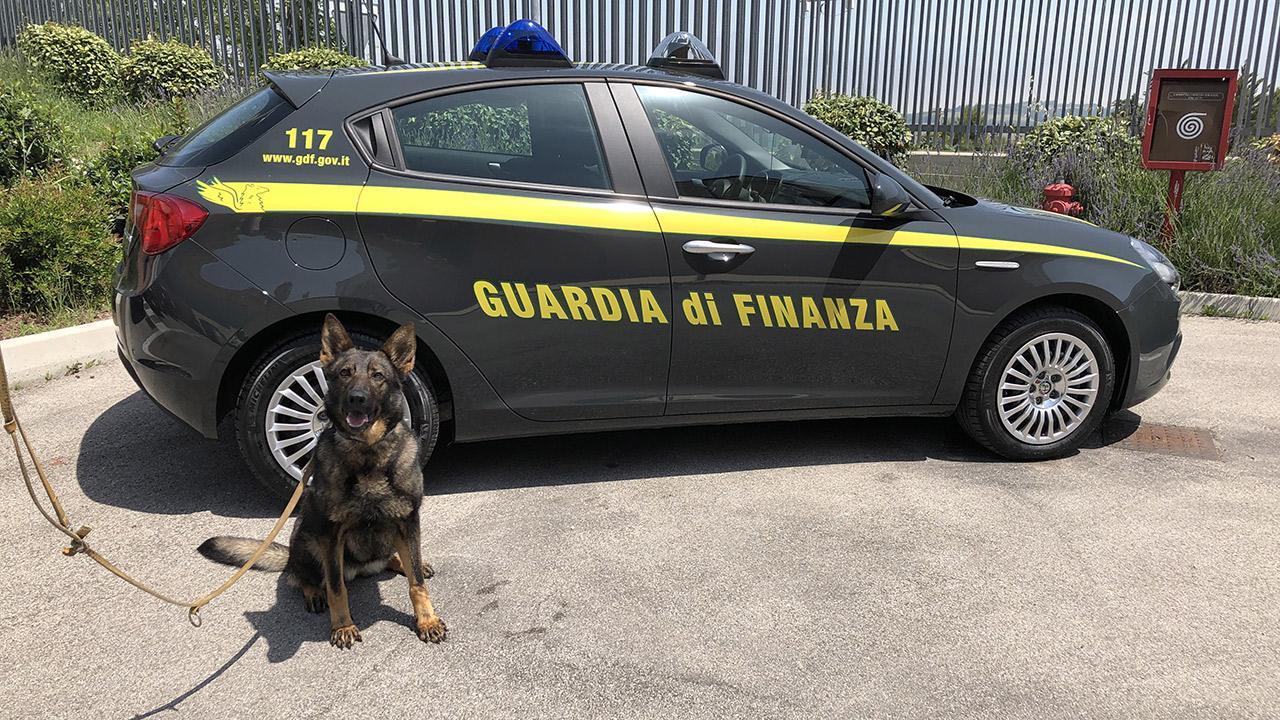 Guardia di Finanza Fermo, continua l'attività di prevenzione e repressione traffico stupefacenti