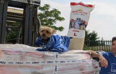 Oipa e Almo Nature, 760mila pasti agli animali senza famiglia