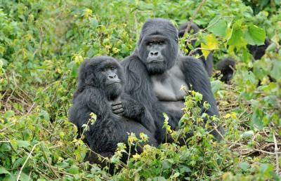 Esseri umani, monogami per difendere la specie