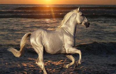 Akhal-tekè, il cavallo più bello del mondo