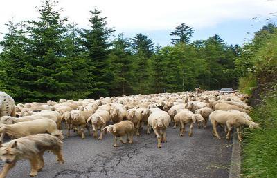 La transumanza, sulle orme dei pastori da Roccafluvione a Montegallo