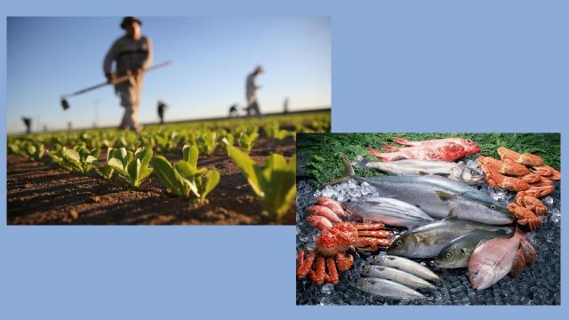 """Regione: da Assam a """"Marche Agricoltura Pesca"""", innovazione e servizi per il sistema agroalimentare e ittico"""