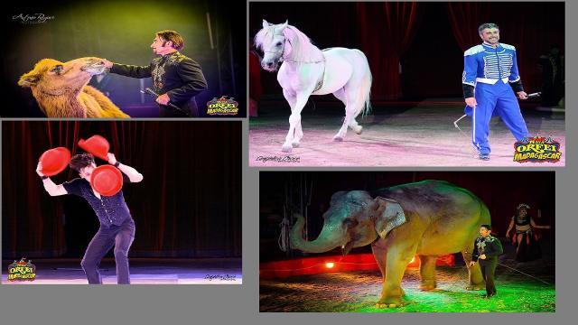 Ascoli Piceno, arriva lo show circense del ''Maya Orfei Circo Madagascar''