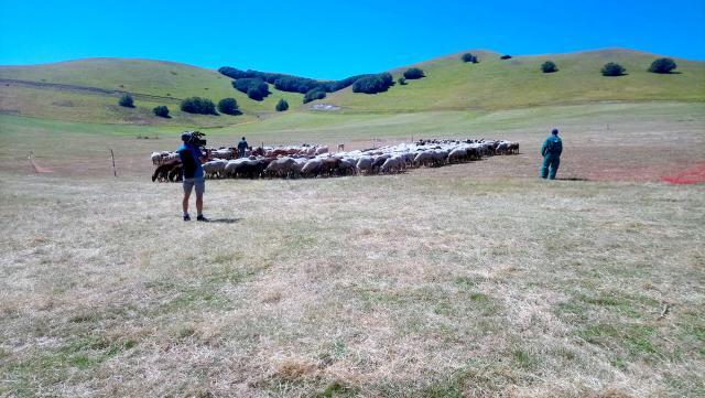 Storie di pastorizia e bovino marchigiano, allevatori delle Marche protagonisti su Canale 5